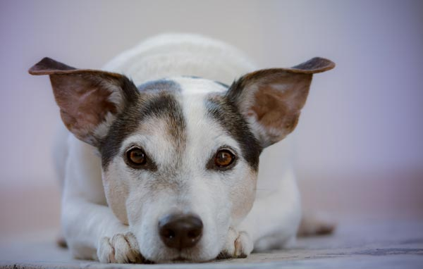 Etapes de la seance d'hypnose pour ne plus avoir peur du chien